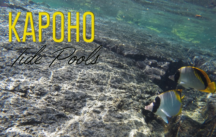 Tide Pool Kapoho