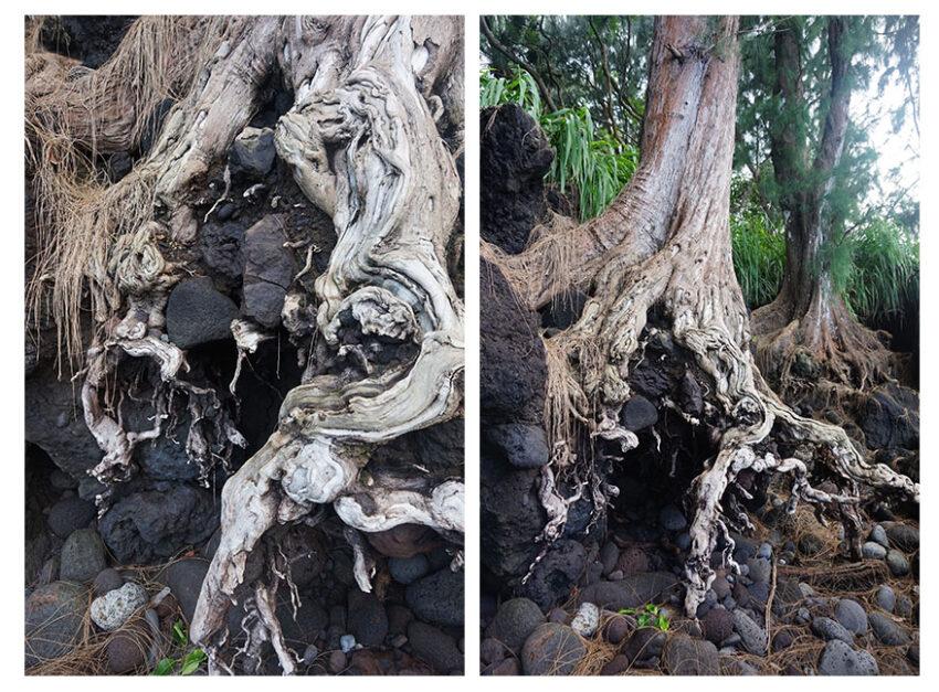 arbres_laupahoehoe