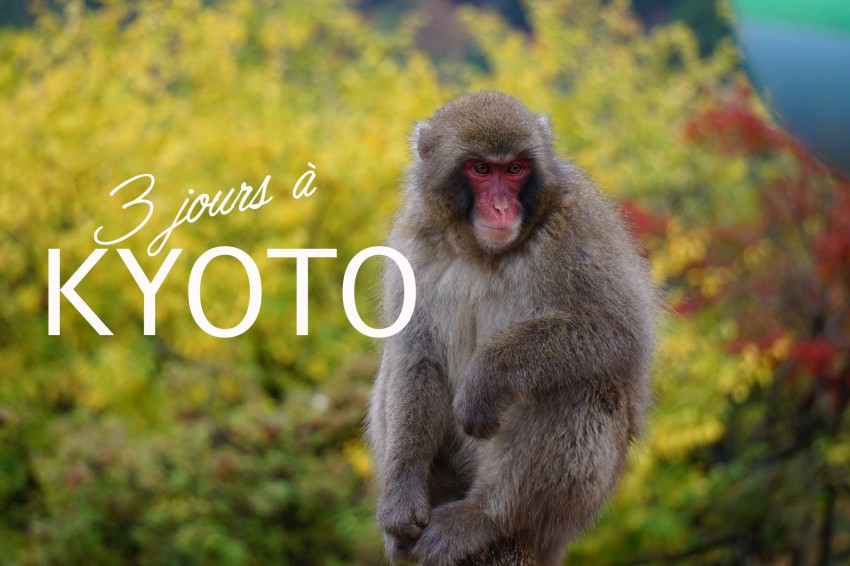 Kyoto_plusvertailleurs