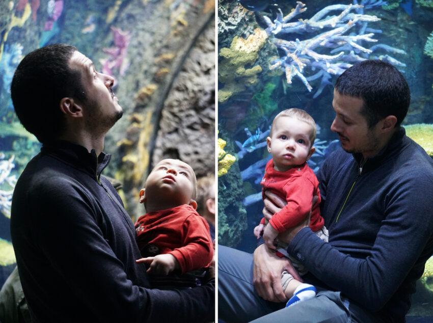 aquarium_zoo_rotterdam