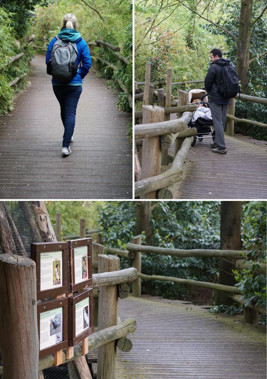 zoo_rotterdam_Asie